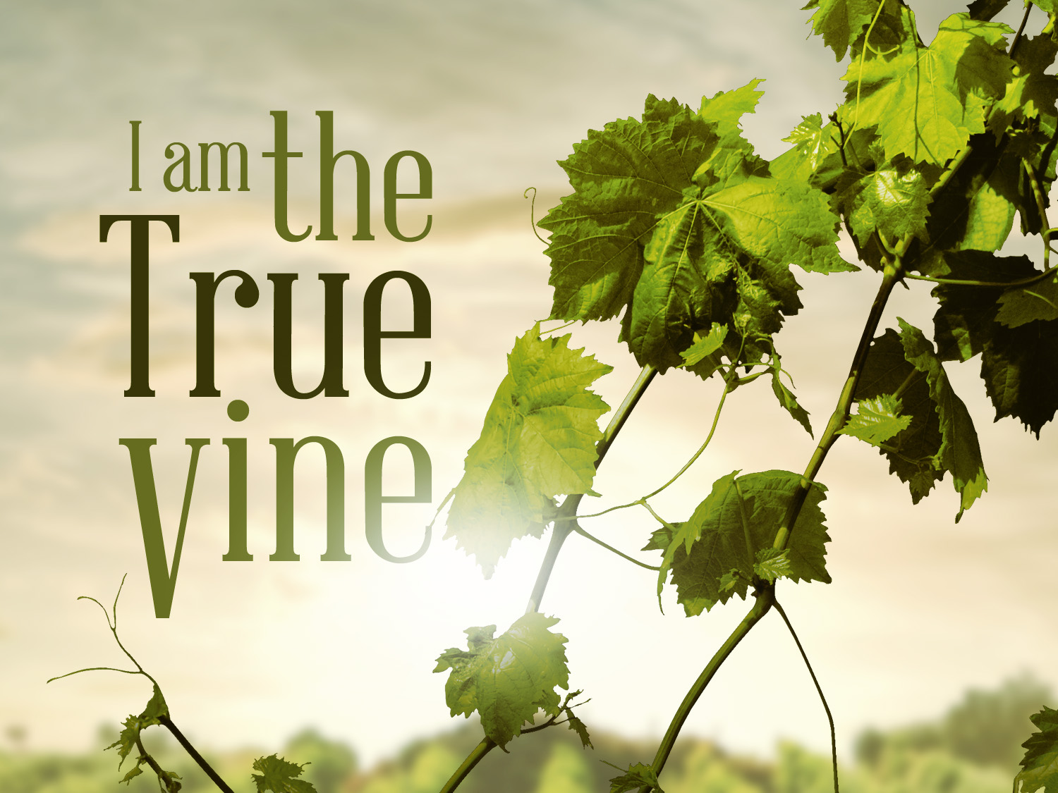 """ABIDE IN ME… FOR APART FROM ME YOU CAN DO NOTHING"""" HOMILY"""