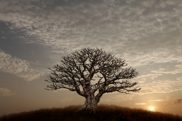 Barren-Tree (1)